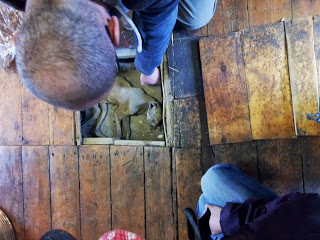 Marco lifts up the loose floorboards to reveal a 400 year old mummified cat - put there for good luck.
