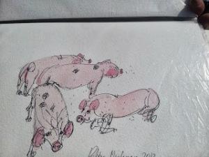 robbiemacgregor_pigs