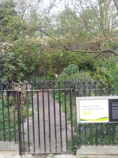 Tiny Barnsbury Wood hums with birdsong and insect life. It's one of Islington's treasures, but only open on Tuesdays.