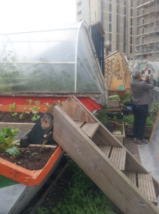 The Skip Garden has a lovely cafe which serves food and drink grown in repurposed skips. (c) islington faces