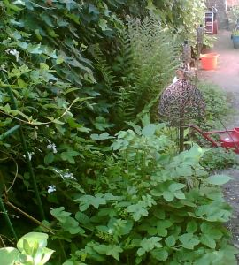 Fern bed in spring with meadowsweet
