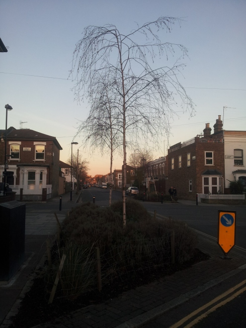 Street trees on Monsell Road. New understanding of how much our trees are worth may help Londoners make the case for Greater London to become an urban national park. Find out more about this idea at greaterlondonnationalpark.org.uk.