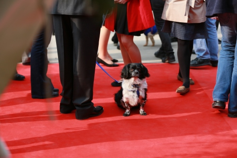Max on the red carpet.